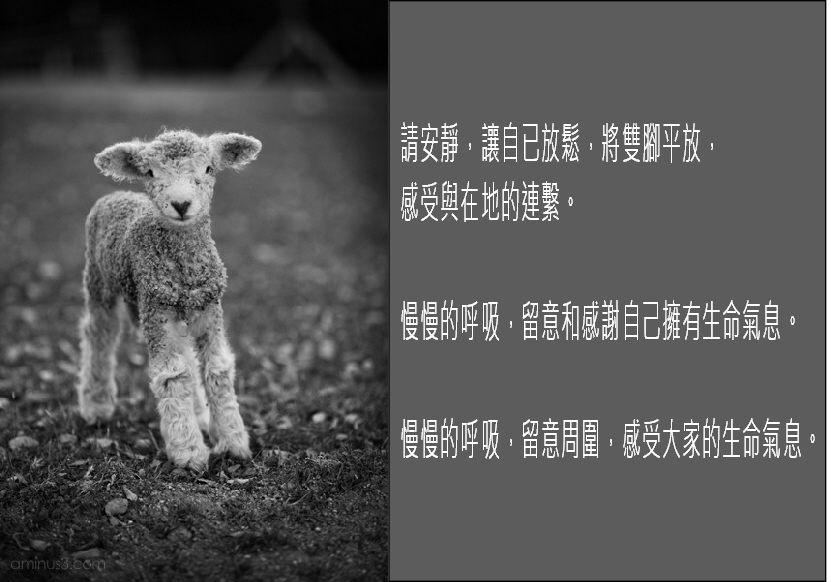 lamb and meditation
